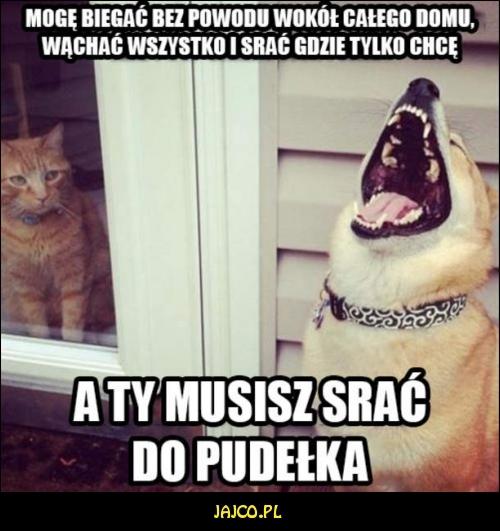 Pies Vs Kot Jajcopl