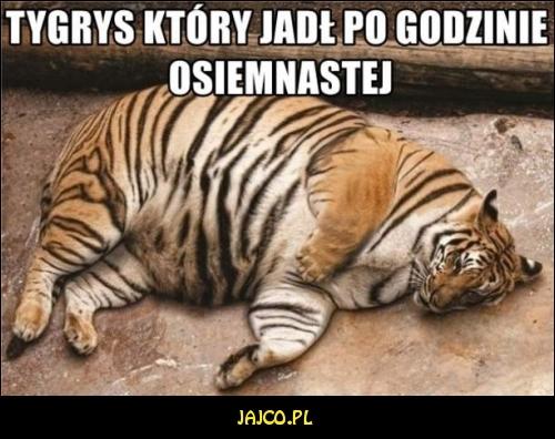 Tygrys który jadł po osiemnastej