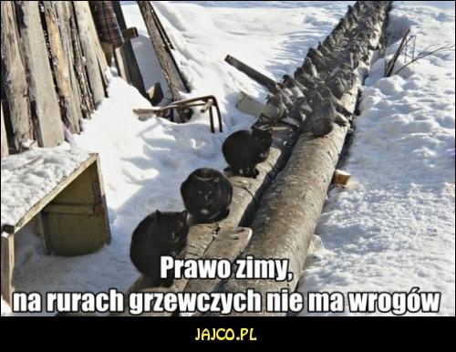 Prawo zimy